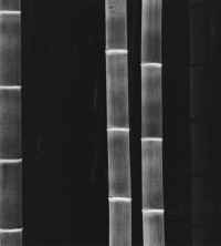 Rolfe Horn - Giant Bamboo, Kyoto, Japan, 2001