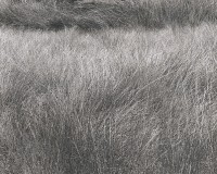 Koichiro Kurita, Summer Grasses, Luzere, France, June, 1996