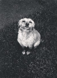 Jonathan Clark, Farm Dog, Ottowa, Illinois, 1967