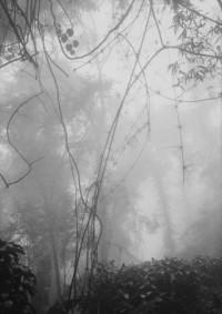 Untitled, Ba Vi#2, 1998