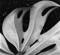 Sculpted Leaf, Hawaii, 1979