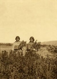 Golden Rod Meadows, Piegan, 1911