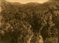 Palm Ganon, 1924
