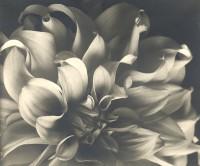 Flower, 1930