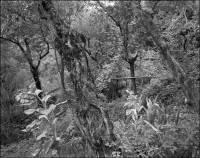 Garden near Carrara, 1988