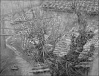 Umbrian Scene 1, 2006