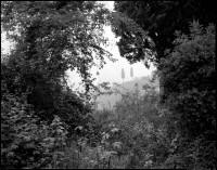 Cypress Trees, 1990