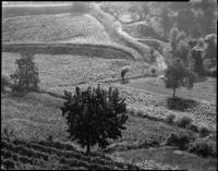 Landscape 136, 1987