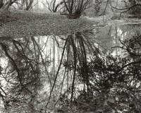 Scott Creek 109, 1986