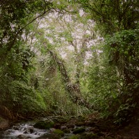 Virgin Forest, 2009