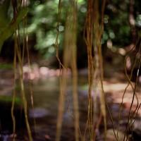 Jungle Roots, 2009