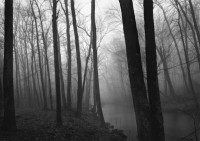Trees and Fog, Redding, Connecticut, 1968
