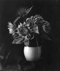 Sunflower, 1969