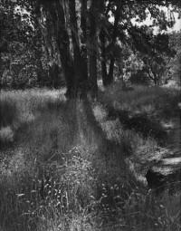 Shadows, circa 1950's