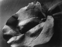 Untitled, 1933 (Leaf)