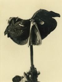 Rondal Partridge - Plant Face 2, 2003