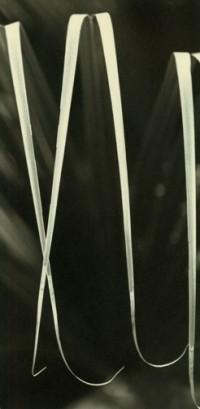 Rondal Partridge - A Languorous Lot