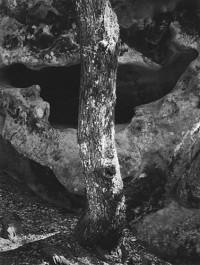 Ansel Adams – Castle Rock, Summit Road, above Saratoga, California, 1963
