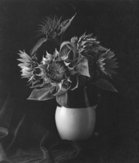 Paul Caponigro – Sunflower, 1969