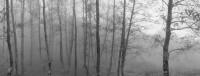 Pentti Samallahti – Monte Sacro O Gelbison, Italy (Trees) 1999