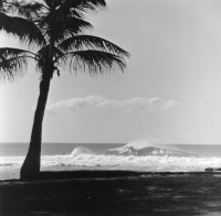 Palm Tree Surfers on Sunset Beach, 1962