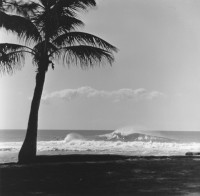 Ron Church – Palm Tree, Surfers on Wave, Sunset Beach, Hawaii, circa 1962