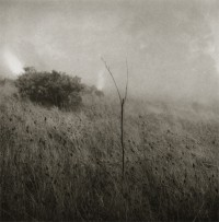 Unai San Martin – Grass in the Fog