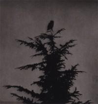 Unai San Martin – The Owl