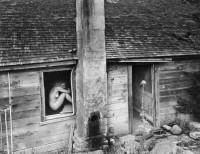 Wynn Bullock, Woman and Thistle, 1953