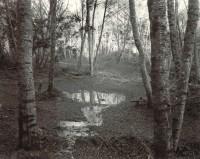 Joel Leivick, Scott Creek 16