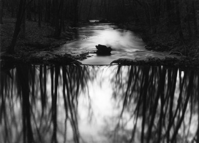Paul Caponigro, Woods, Redding, Connecticut, 1968