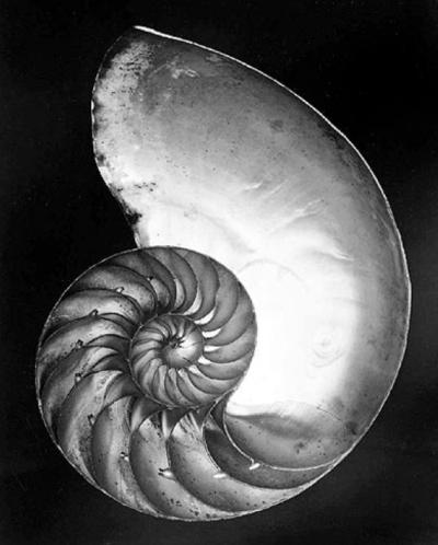 Edward Weston, Chambered Nautilus (Shell), 1927