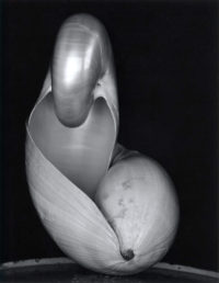 Edward Weston, Two Shells. 1927