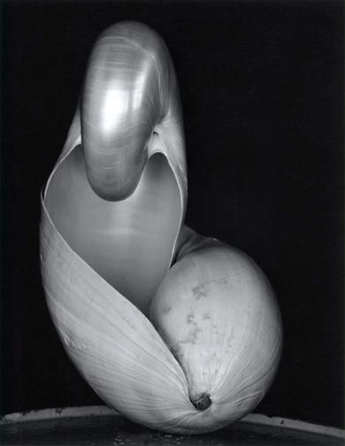 Edward Weston, Two Shells. 1927