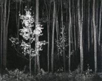 Ansel Adams, Aspens, Northern New Mexico (Horizontal), 1958