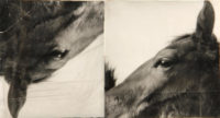 Doug and Mike Starn, Horses (ICA), 1985