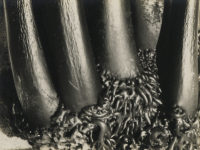 Sonya Noskowiak, Untitled, Kelp, 1931