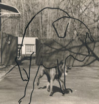 WWilliam Wegman, Dog Drawn on Dog, 1983