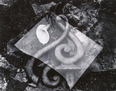 Edward Weston, Rubbish Pile and Lily, 1939