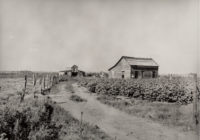 Dorothea Lange, Small Cotton Farm, US 62, Oklahoma, 1938
