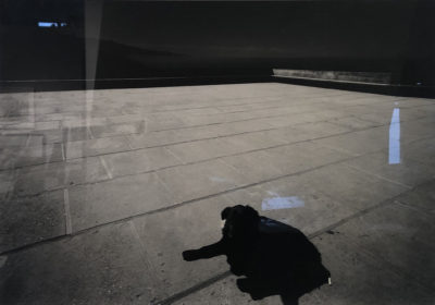 Wolf von dem Bussche, Dog on Terrace, 1970