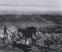 Ansel Adams, Paul Masson Vineyards, 1959