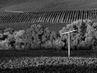 Jim Banks, Vineyard and Fan, Napa Valley, California, 2019