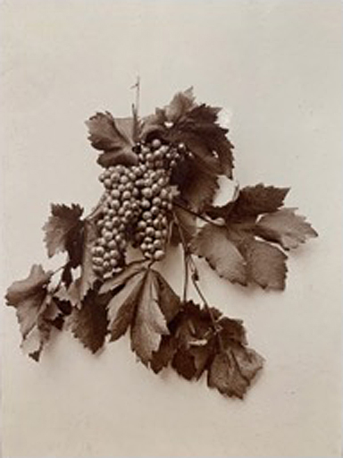 J. H. Bratt, Leaves and Grapes, 1894