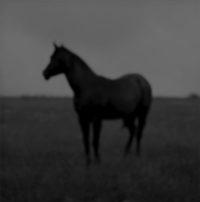Jock McDonald, Horse, 2010