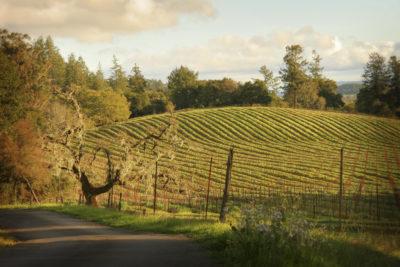 Lisa Rani Horn, Highway 12, Sonoma Valley, 2016