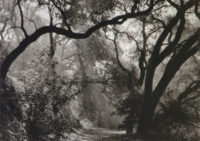 Margaretta Mitchell, Live Oaks Intertwined, 1963