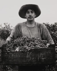 Pirkle Jones, Grape Picker, Berryessa Valley, California, 1956