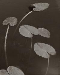 Koichiro Kurita, Floating Leaves, 1998