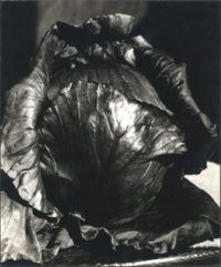 Cabbage, 1939